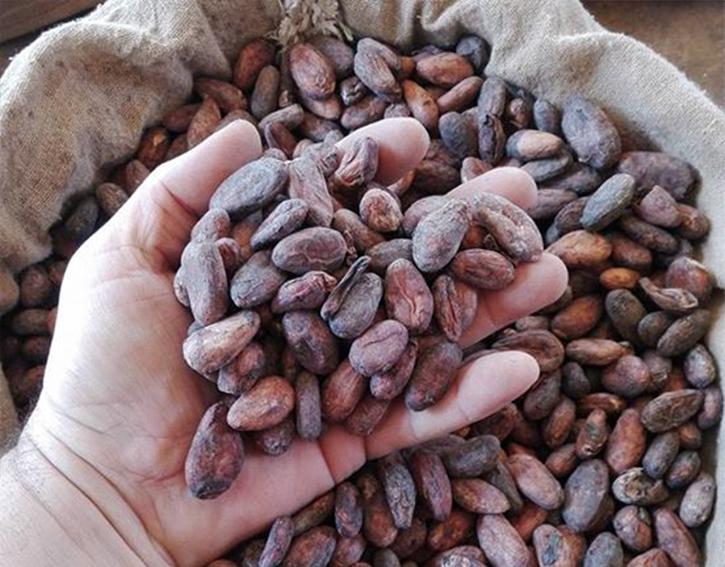 Cacao en grano crudo